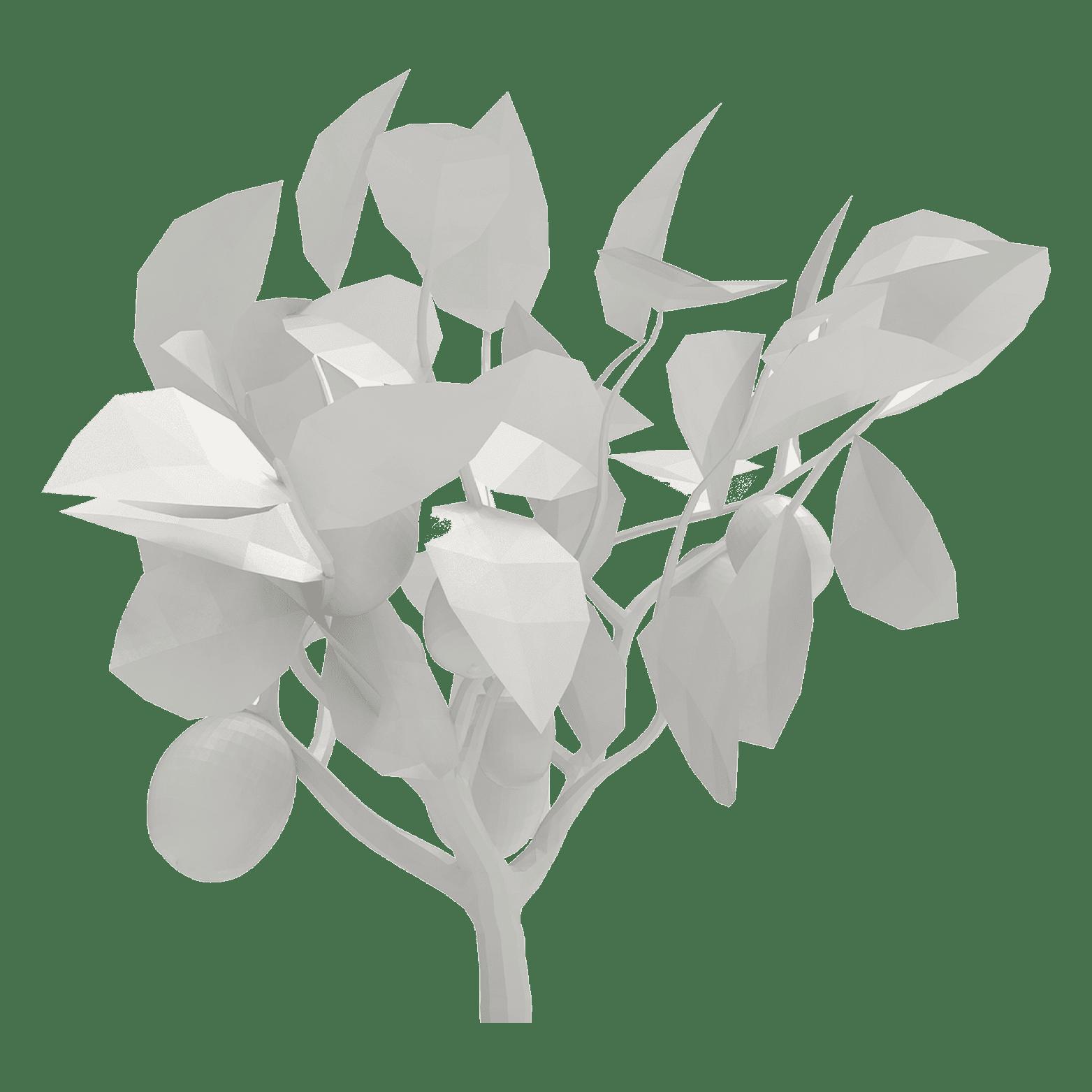Environnement - light